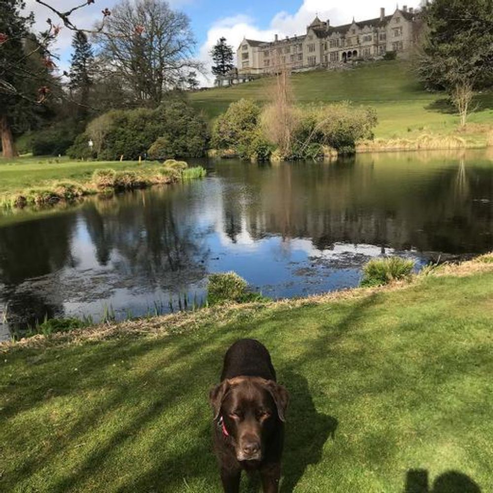 dog friendly hotels in Devon