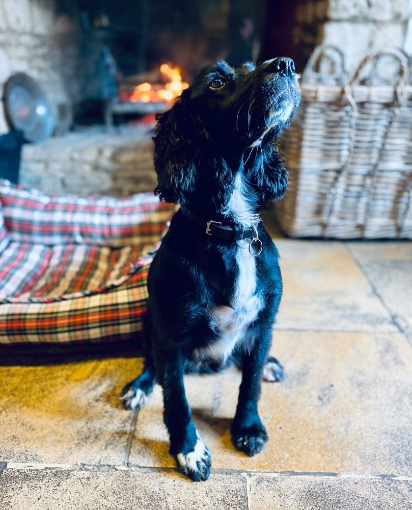 10 Dog Friendly Hotels in the Cotswolds