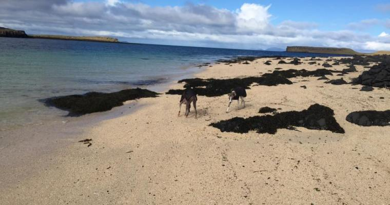 Dog Friendly Holidays in Scotland -Our Favourite Destinations