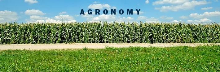We Look Ahead to Summer, Corn Field