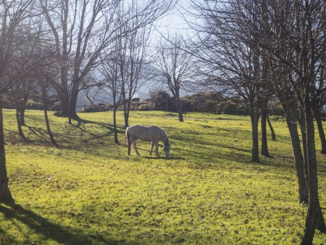 Livestock loose in the park