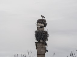 Double decker storks