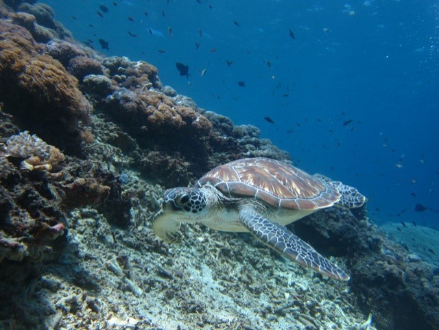 Blue-Corner-Dive-Our-first-ever-scuba-diving-experience