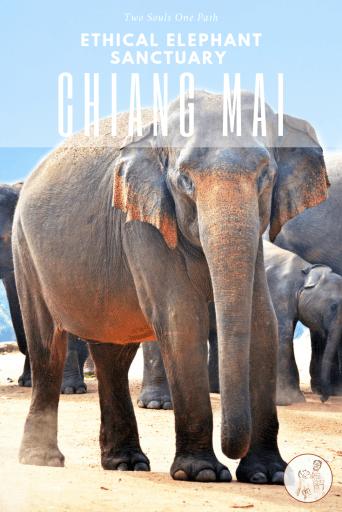 Pin it elephant sanctuary