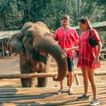 Ethical elephant sanctuary Chiang Mai: Bamboo Elephant Family Care review