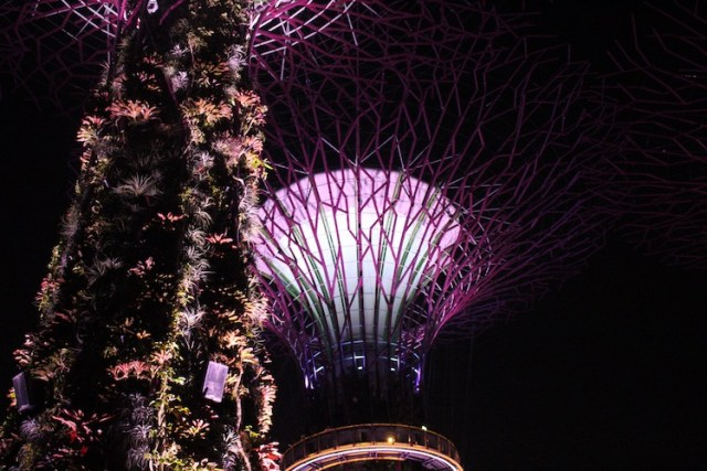 supertree-grove-11-unmissable-things-to-do-in-Singapore-Two-Souls-One-Path.