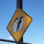 Phillip island penguin parade – All you need to know