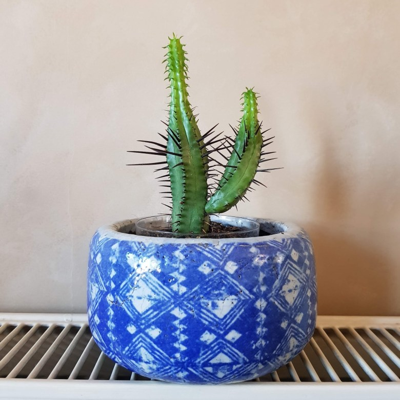 blue glazed terracotta plant flower pot Anthropologie