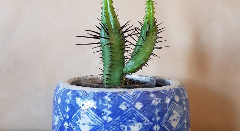 blue glazed terracotta plant flower pot