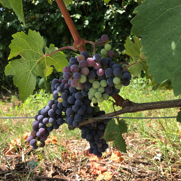 North France Driving Itinerary Travel Tips Saint-Emilion Wine Grapes