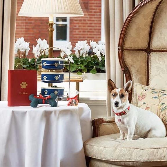 Dog friendly Egerton House