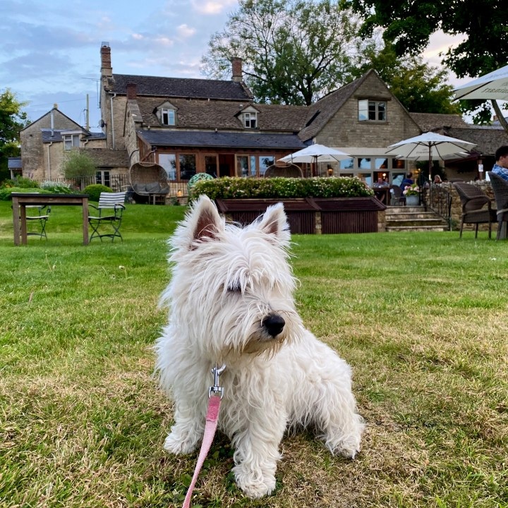 The Feathered Nest Country Inn Restaurant Pub Amazing View Cotswold Outdoor Dining Gastropub Dog Friendly Westie