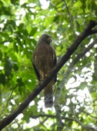 Birds of Tikal