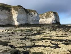 Bempton Cliffs, east coast of England