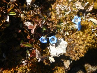 The blue flowers and a little piece of the silvery rock that's everywhere, even our boots sparkle