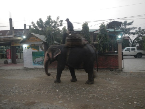 One elephant we passed on the street