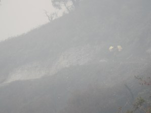 A miner descending through a mix of morning mist and sulphurous fumes