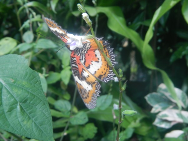 One of my favourites in the Butterfly Park