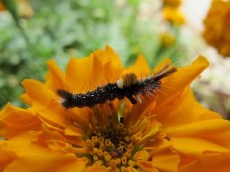 Caterpillar in the botanical gardens