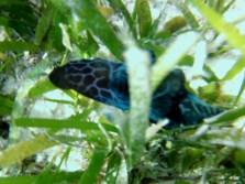 Nudibranch, like a sea slug