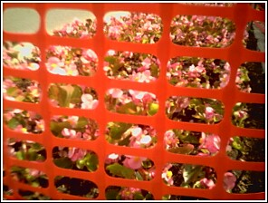 Fenced_flowers