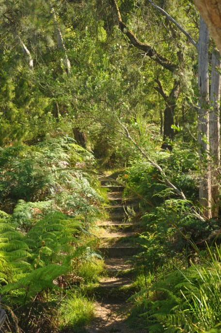 bushwalks on the mornington peninsula kings falls