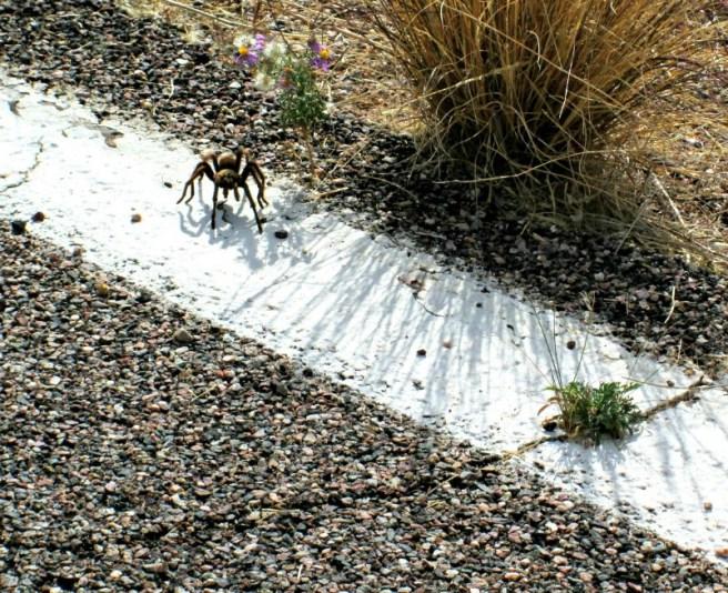 Apache Trail 2 028