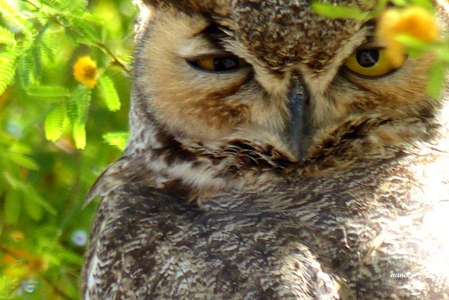 Owl1 020