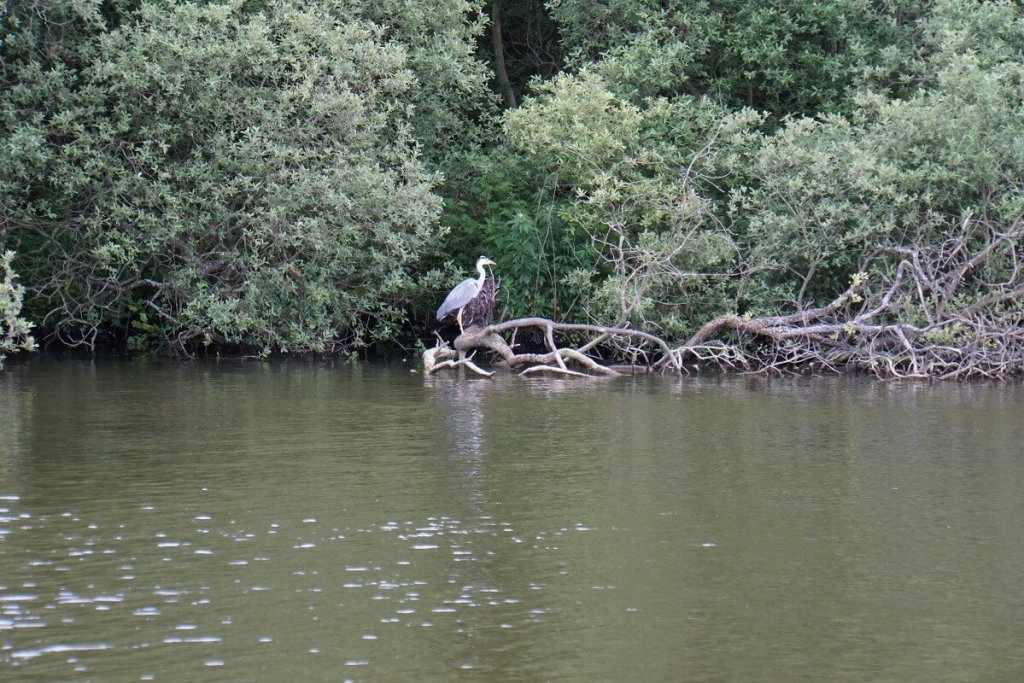 """We spotted a pretty heron! - """"Hire a Boat on the Norfolk Broads"""" - Two Traveling Texans"""