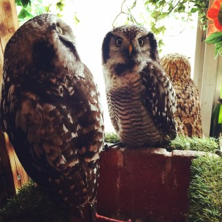 Beautiful owls all captured in a small room