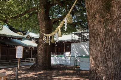 Two trees symbolizing happienes in mariage