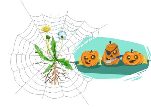 spider-halloween