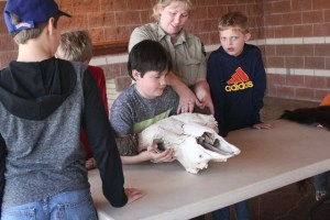 """""""I could lift the bison skull."""" Caprock Canyons SP, TX."""