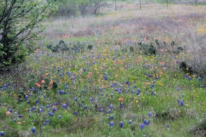 Wildflowers are blooming. Hiking at Cleburne State Park, Texas.