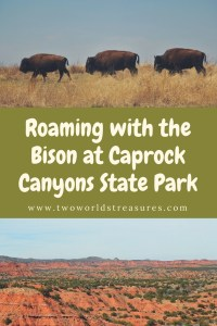 Roaming with the Bison at Caprock Canyons State Park - Two Worlds Treasures