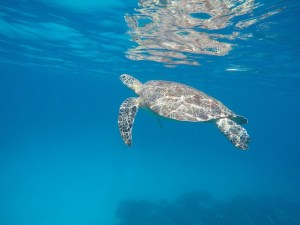Flores: sea turtle: free style: Two Worlds Treasures