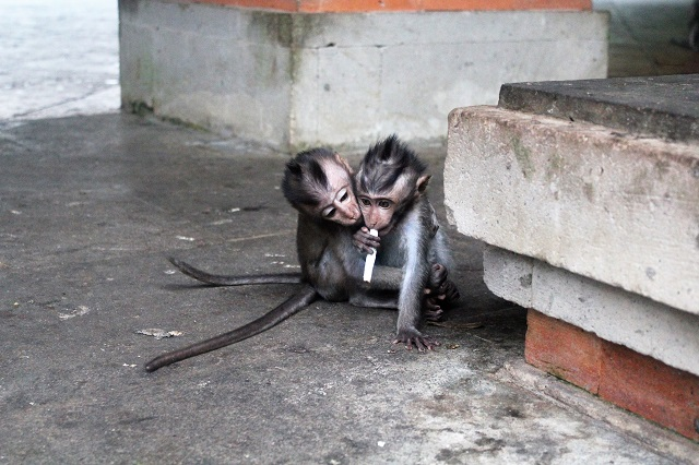 Visiting Bali with a 10-year-old boy: Ubud Monkey Forest: naughty boys