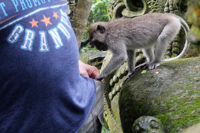 Visiting Bali with a 10-year-old boy: Ubud Monkey Forest: pick pocket