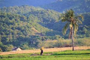 Two Worlds Treasures - a lady with a bucket on her head, Dintor, East Nusa Tenggara.