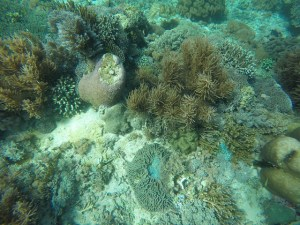 Island Hopping Flores Day 2 - Pink Beach - fancy corals - Two Worlds Treasures