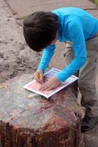 Petrified Forest National Park - working on Junior Ranger program - Two Worlds Treasures