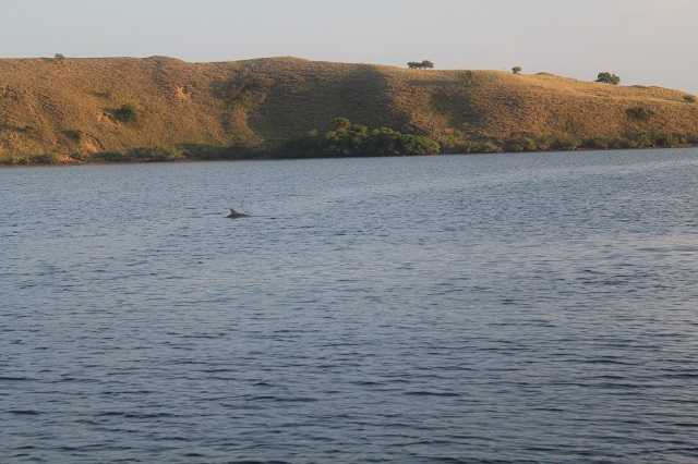 Island Hopping in Flores, Indonesia - Day 3 - dolphin in the early morning