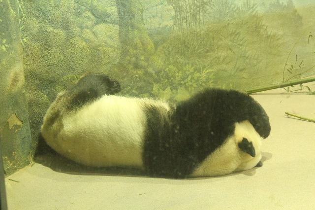 Visiting Washington, D.C. during Christmas Break-Smithsonian-Zoo