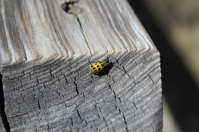 Green Ladybug - Chasing a Dramatic Fall Scene in Texas - Two Worlds Treasures
