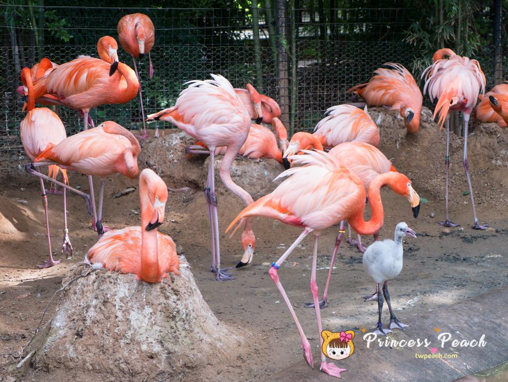 Fort Worth Zoo 紅鶴