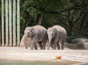 Fort Worth Zoo Asian Elephant 大象