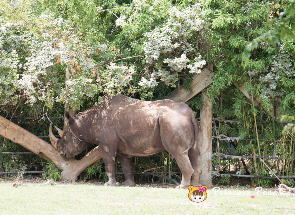 Fort Worth Zoo Black Rhino 犀牛