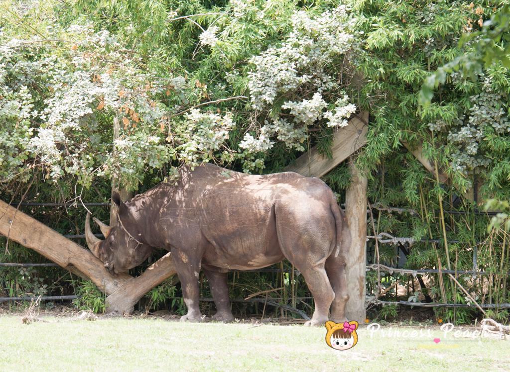 Fort Worth Zoo Black Rhino 犀牛