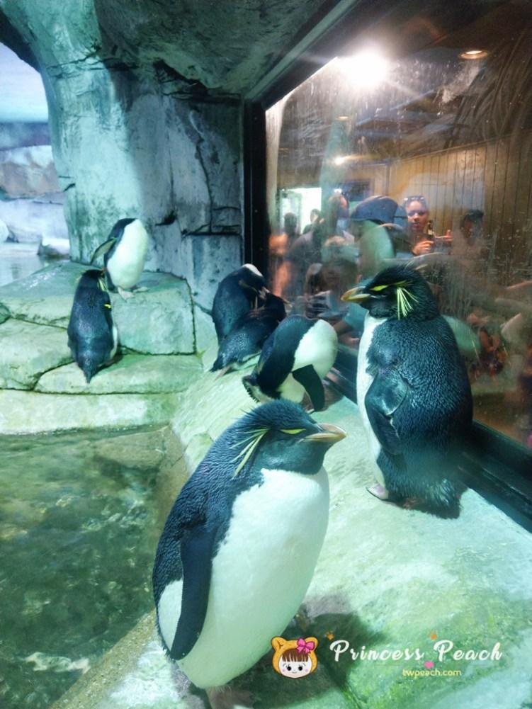 Fort Worth Zoo Rockhopper penguin