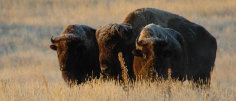 Image Credit: USFW Mountain-Prairie